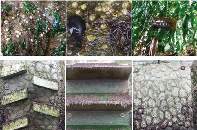 Photos of marine life growing on seawall