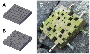 "Figure 2 from Loke et al. (2014) - their caption reads: ""3D models (AutoCAD drawings) of tiles with a single structural component (square-pits) at two levels of complexity generated via CASU. (A) 'simple tile' and (B) 'complex tile'. (C) a fabricated 40×40×6 cm^3 concrete tile mounted onto a seawall (photograph taken one month after deployment)."""